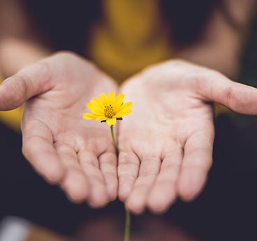 selective focus photography of woman holding yellow petaled flowers photo